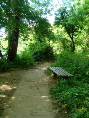 Psalm 23 Summer Faith Challenge: honoring God'sname
